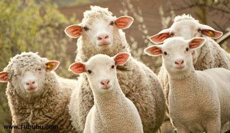 薅羊毛月入5000难不难?听听月入万元的大神怎么说-第1张图片